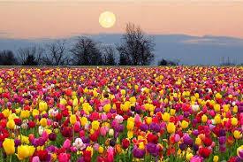 luna flores